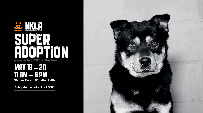 NKLA Adoption Event