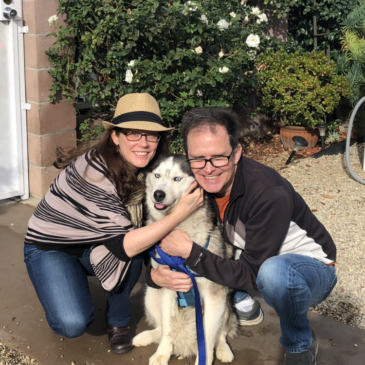 Hollywood Husky #85 – Noelle/Audrey – Adopted