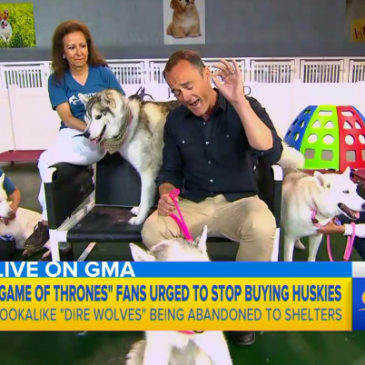 Hollywood Huskies on ABC News Good Morning America!