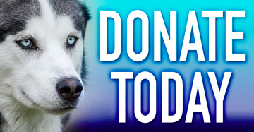 Donate Today to Hollywood Huskies!
