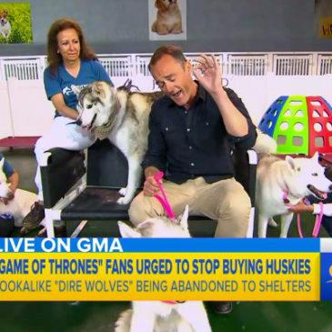 Hollywood Huskies on ABC News Good Morning America!