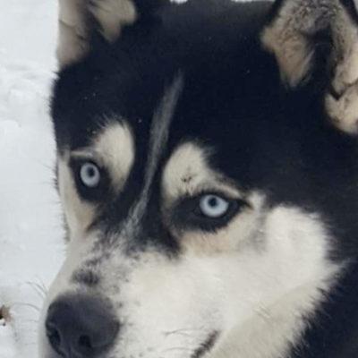 Snow Fun in Alberta | Rescued by Hollywood Huskies